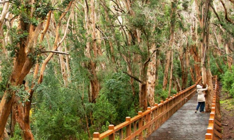 isla victoria and arrayanes national park_Mesa de trabajo 1