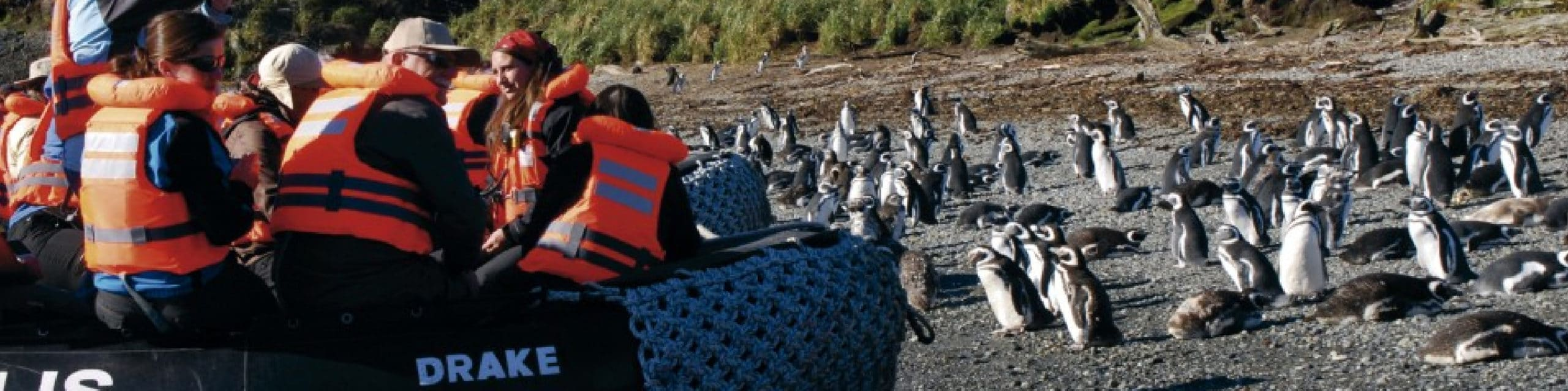 Penguin Colony of Magdalena Island with Australis Cruise Expedition by RipioTurismo Incoming Tour Operator Argentina and Chile