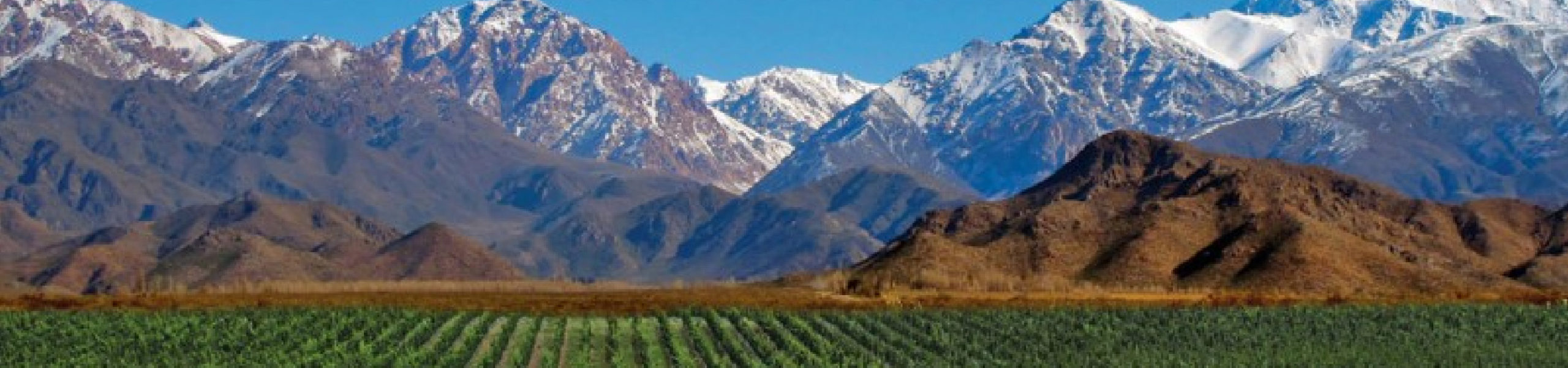 Vineyards and Wineries in Mendoza Wine Country - Argentina. RipioTurismo DMC for Argentina