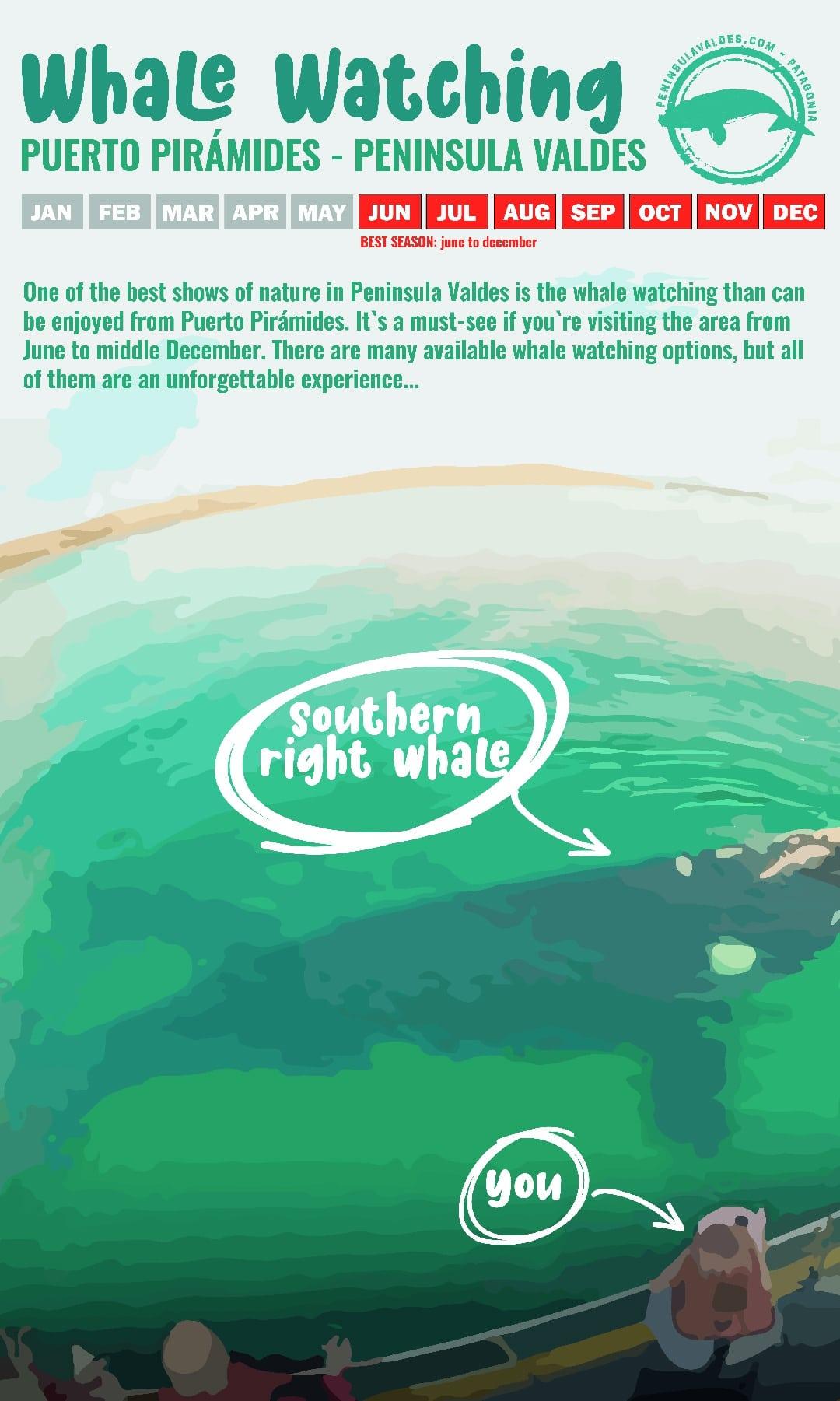 Whale Watching Activity in Peninsula Valdes, Patagonia, Argentina - RipioTurismo DMC for Argentina
