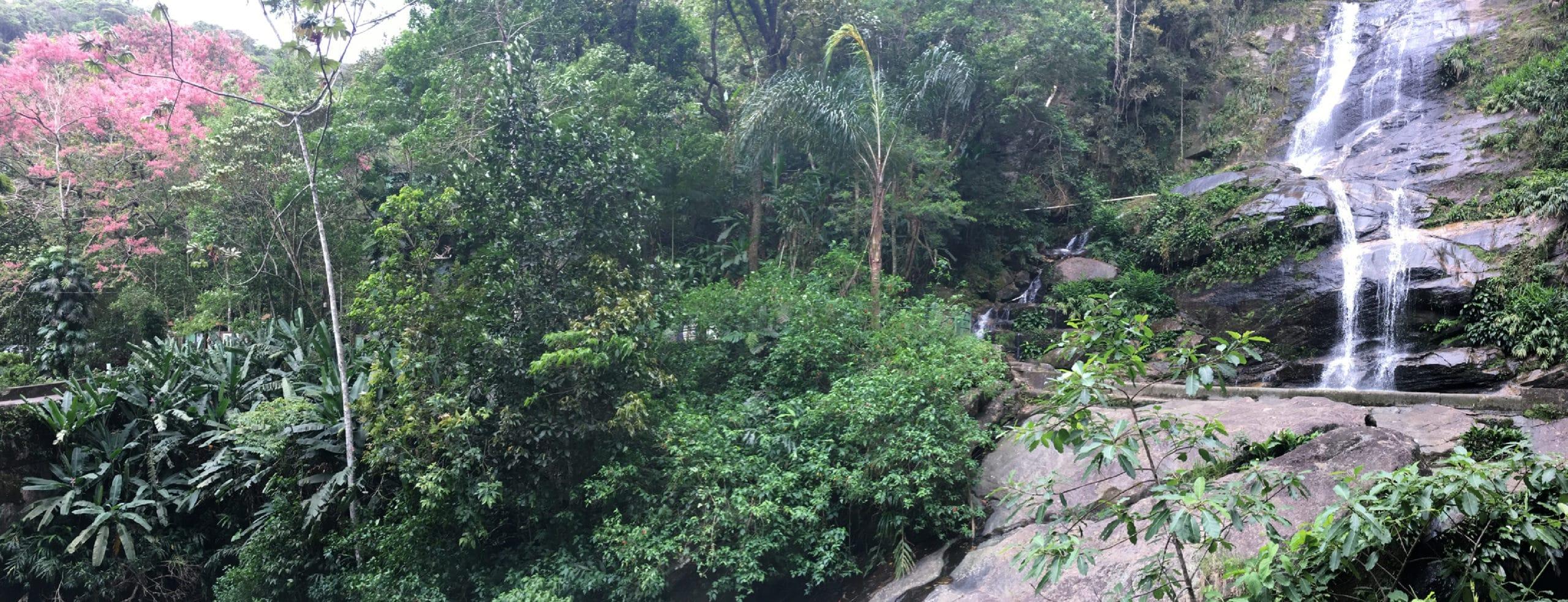Tijuca Forest - Rio de Janeiro, Brazil - RipioTurismo Incoming Tour Operator in Brazil