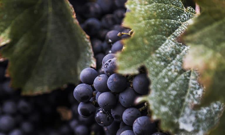 Bike and tasting Zuccardi Winery 4_Mesa de trabajo 1