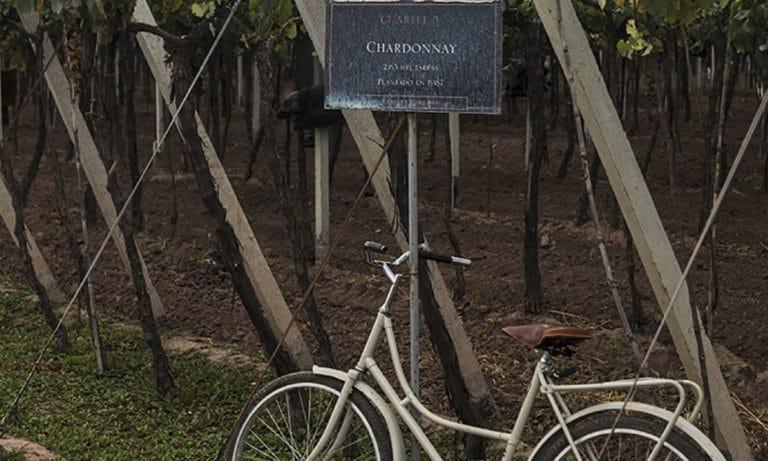bike and tasting Zuccardi Winery 1_Mesa de trabajo 1