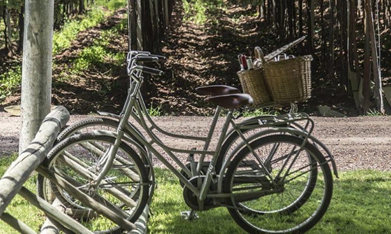bike and tasting Zuccardi Winery 2_Mesa de trabajo 1