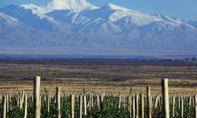 biking between wineries in Lujan de Cuyo 3_Mesa de trabajo 1