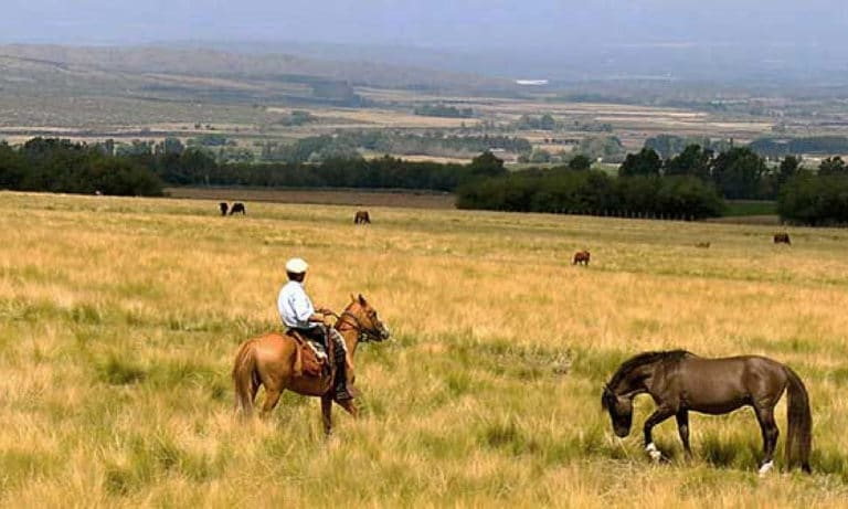 horseback riding estancia la alejandra 4_Mesa de trabajo 1