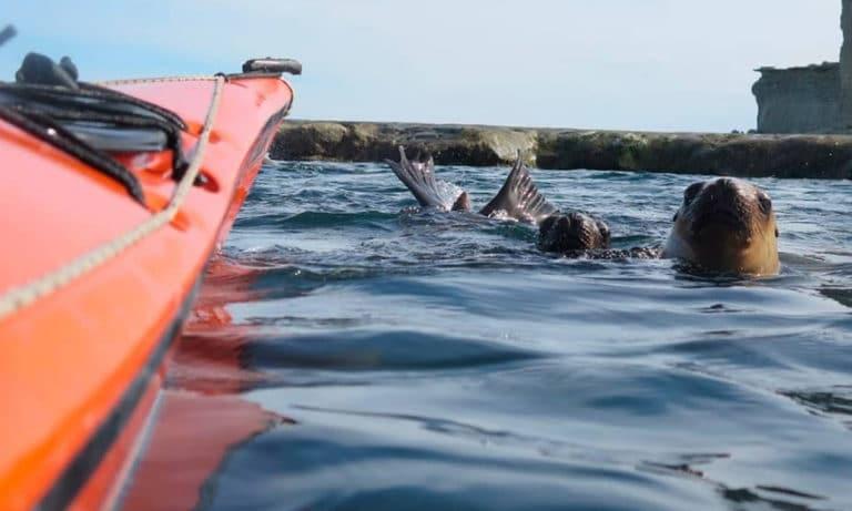 kayaking in puerto piramides 2_Mesa de trabajo 1