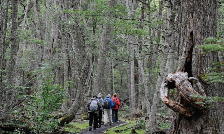trekking and canoes in Tierra del Fuego National Park 6_Mesa de trabajo 1