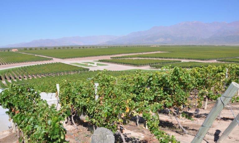 wine experience in mendoza 3_Mesa de trabajo 1