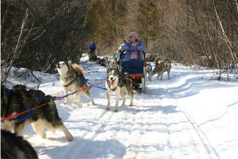 Sledding Dogs in Ushuaia