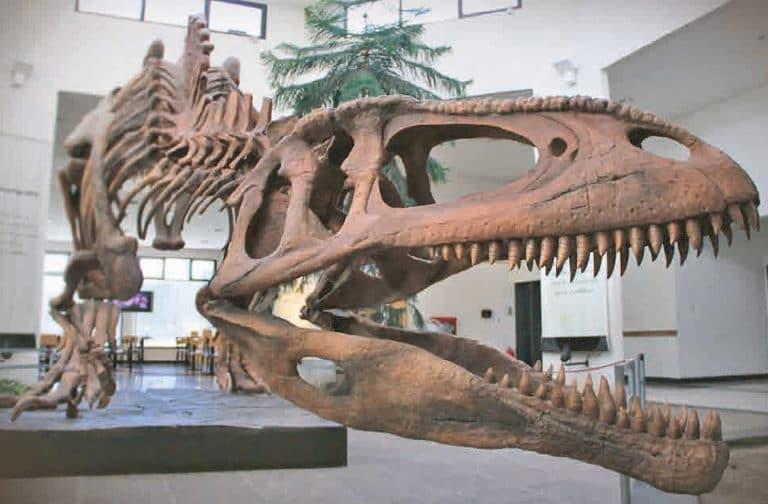 valle-rio-chubut-cultura-museo-dinosaurios-argentinavision