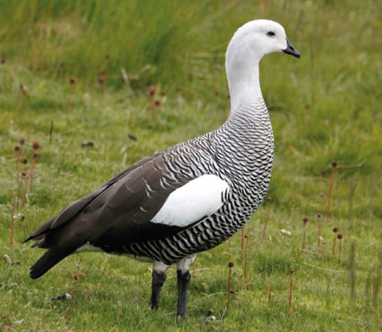Birds in Ushuaia