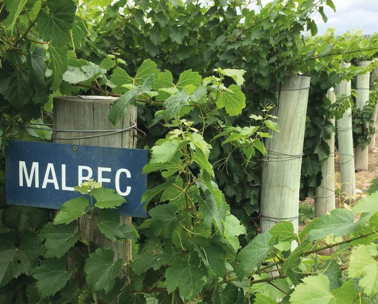 Wineries in Mendoza