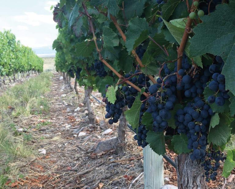 The Malbec Wine - Mendoza, Argentina