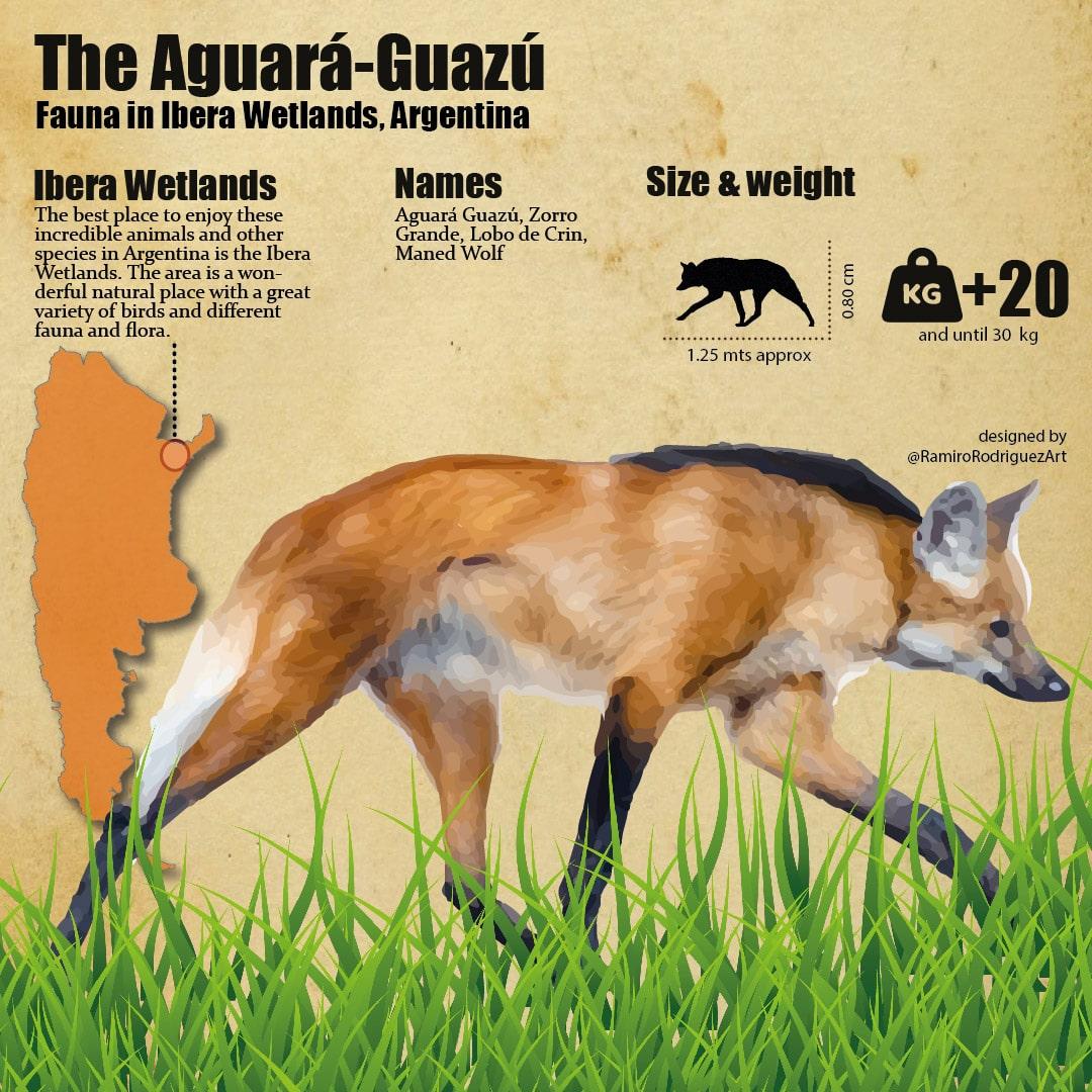 fauna in ibera, aguara guazu