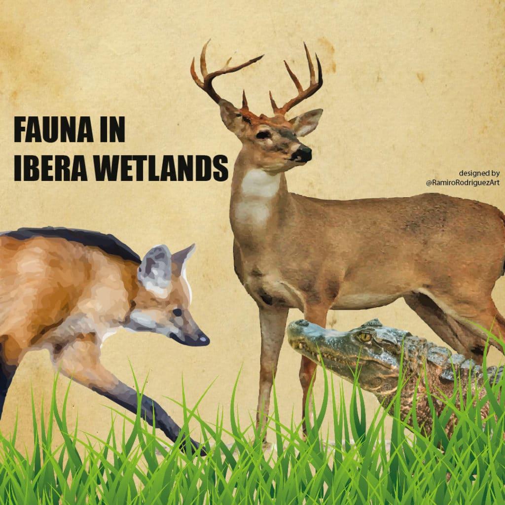 fauna in ibera wetlands