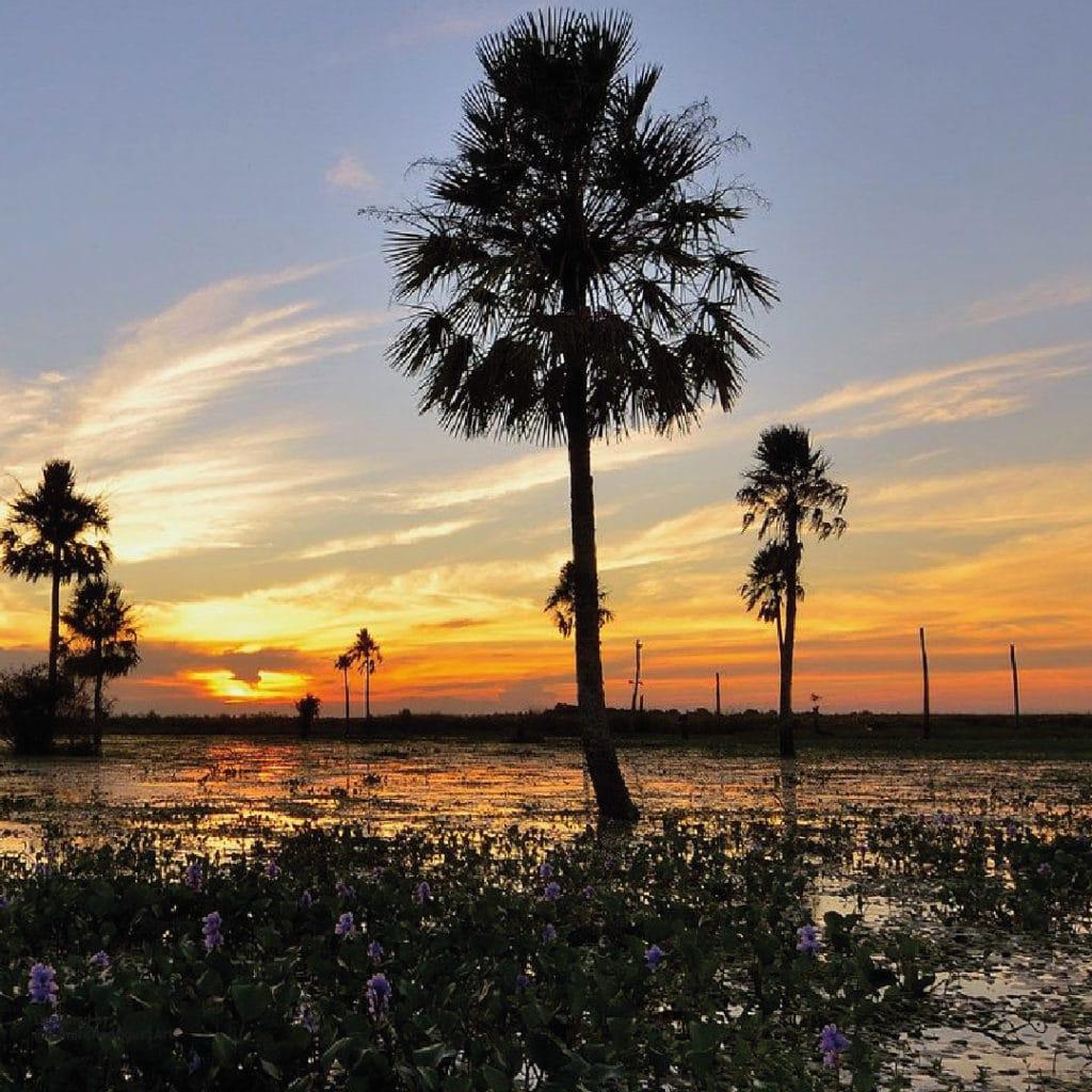 ibera wetlands, Argentina