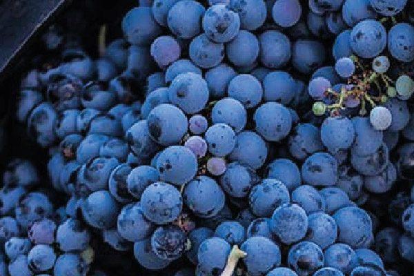 Cavas Wine Lodge Tour