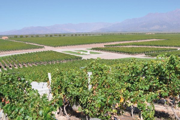 Wine Tours - Argentina